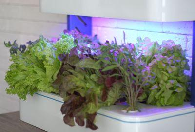 Indoor Garden