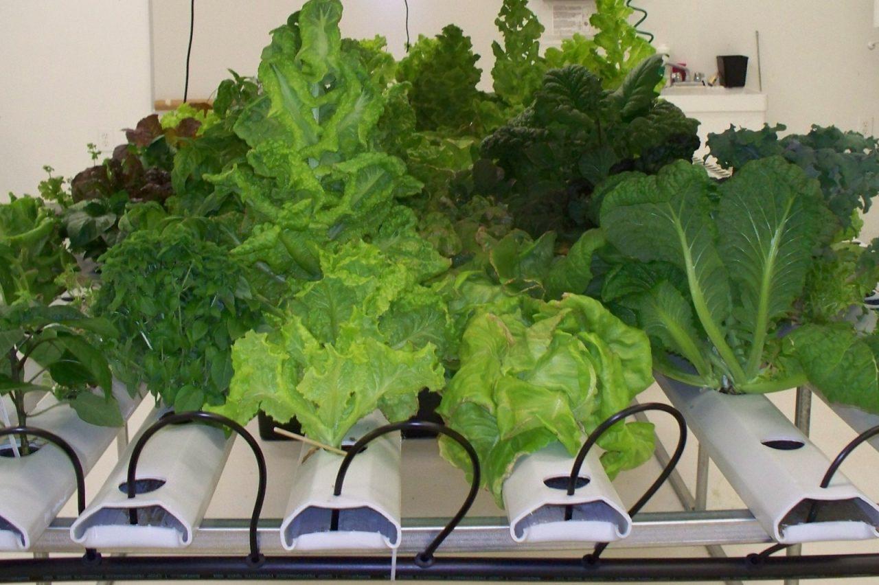 Best 1st indoor garden tips for Indoor vegetable gardening beginner
