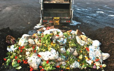 Fertilizer from Food Waste: Smart Solution