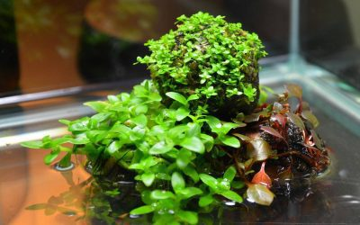 Simple Indoor Water Garden - Wabi Kusa Aquascaping