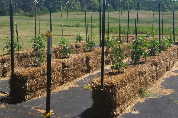 Straw Bale Gardening with Microbe Makers Compost Tea