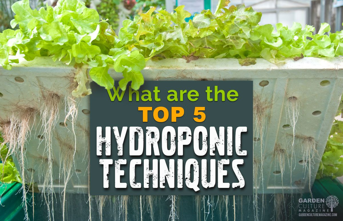 Top 5 Hydroponic Techniques