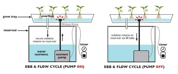 Ebb & Flow Hydroponic System Design