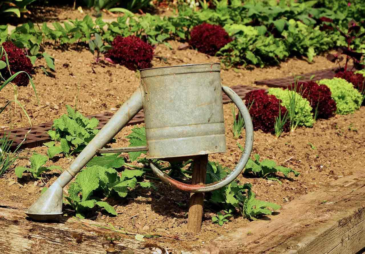 Preparing Your Soil for Winter