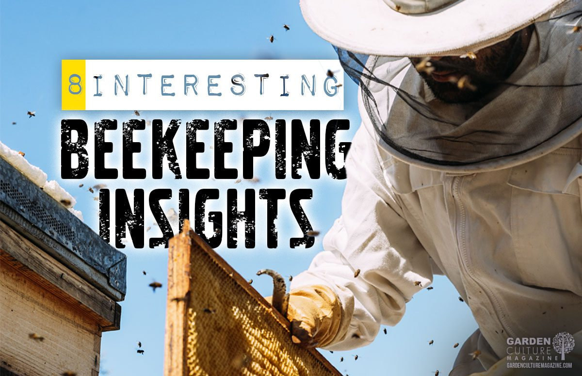 beekeeping insights