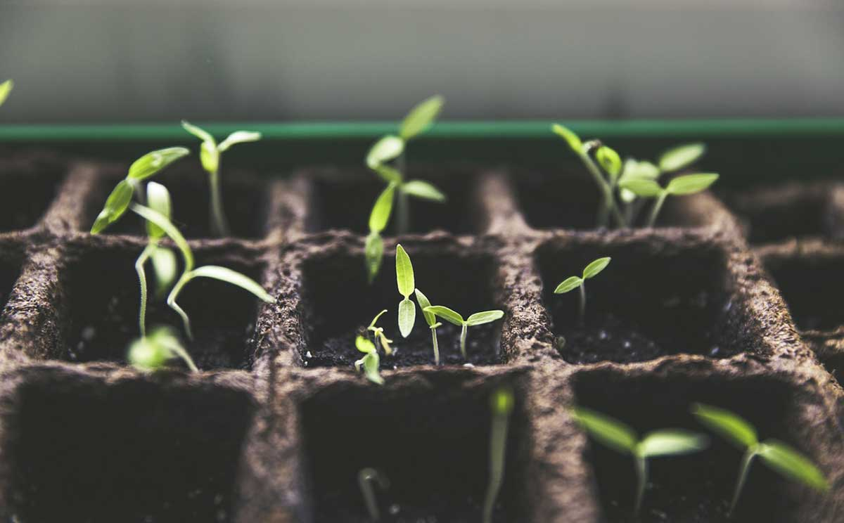 growing season to start your seedlings