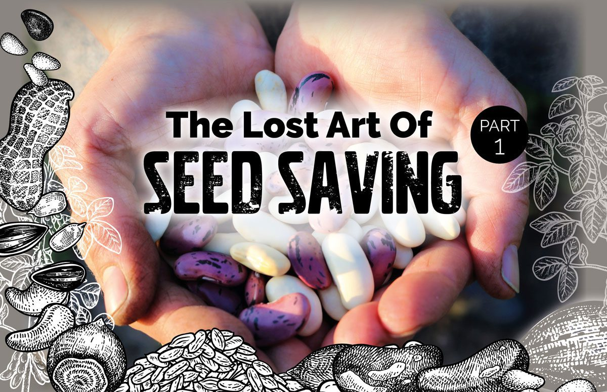 Seed Saving Part 1