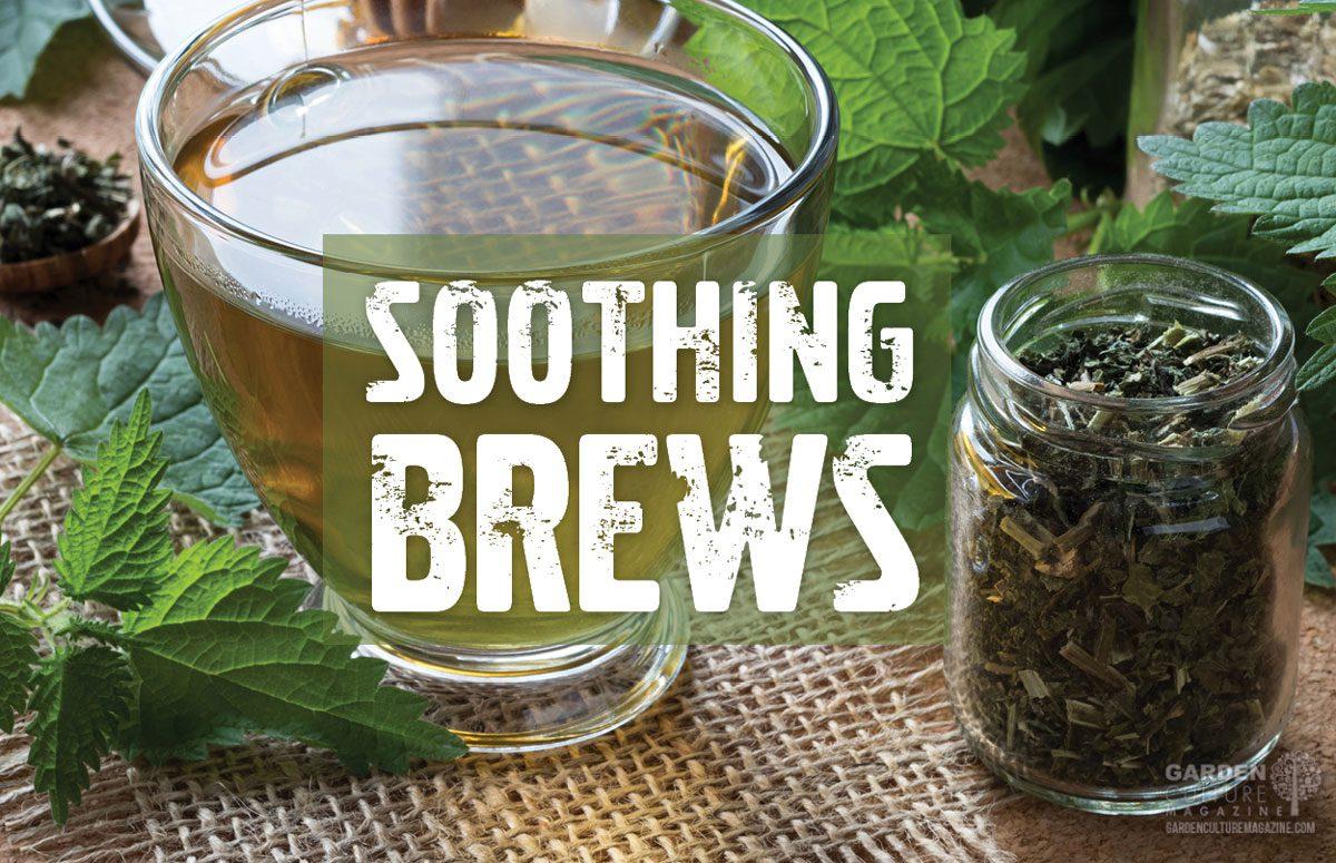 soothing brews
