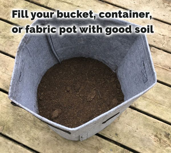 fill bucket with soil