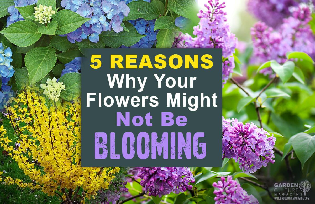 Reasons why your flowers are not blooming