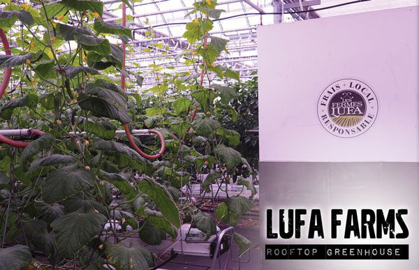 Lufa Farms