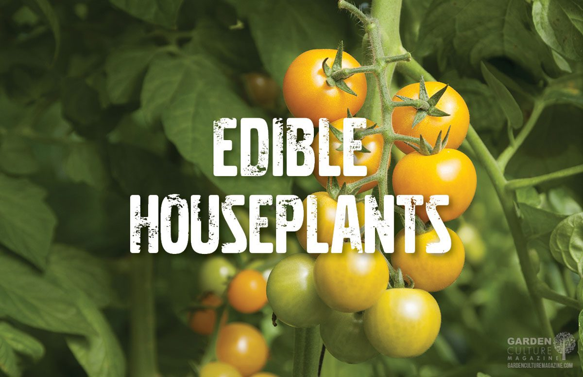 Edible houseplants