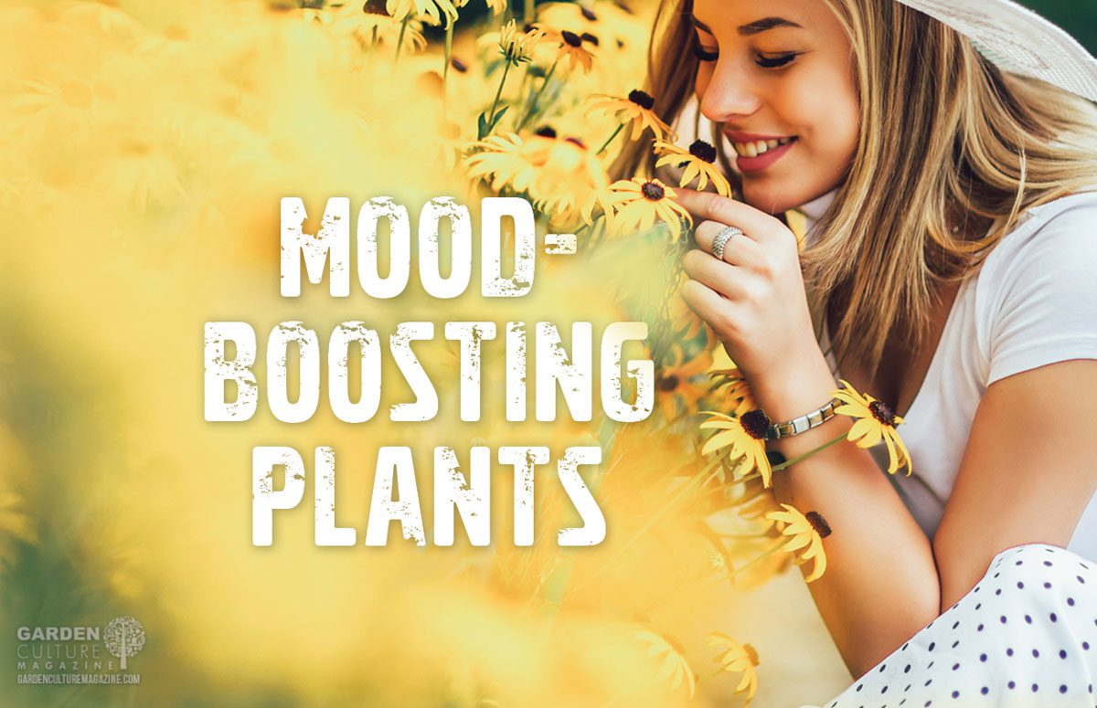 mood-boosting houseplants