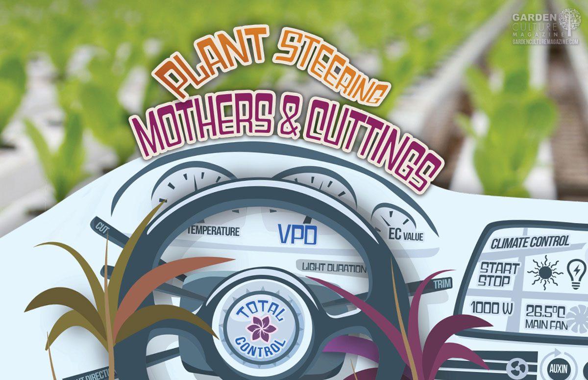 Plant Steering