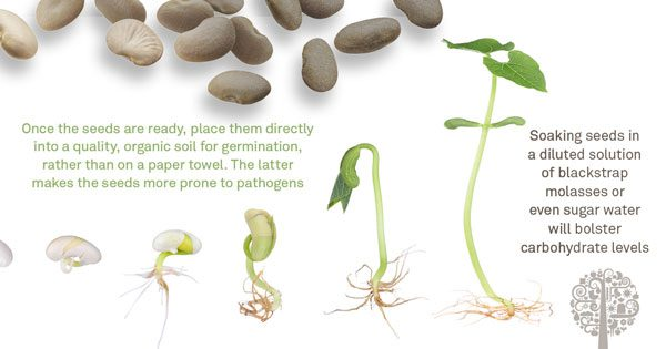 reviving old seeds