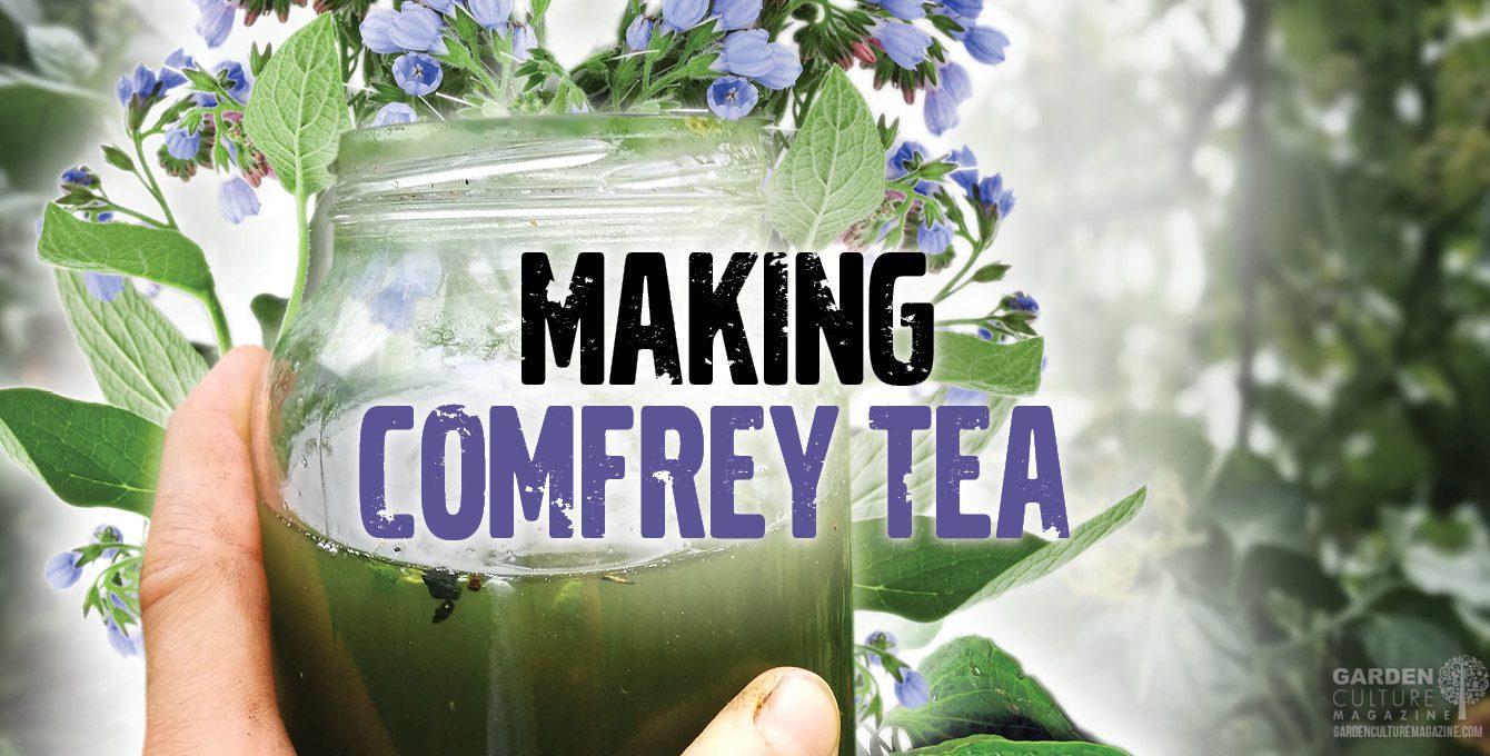 comfrey tea