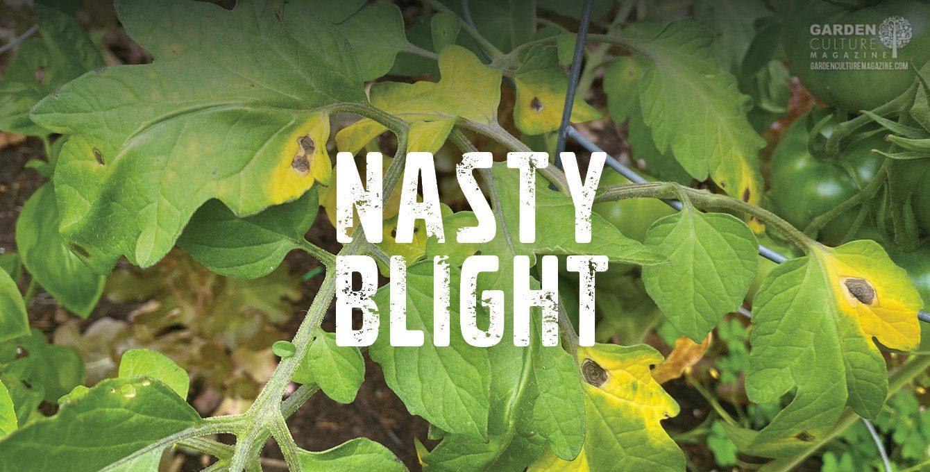 Blight in the garden