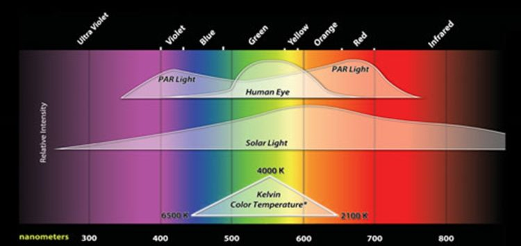 Grow Light Spectrum Your REALLY Need
