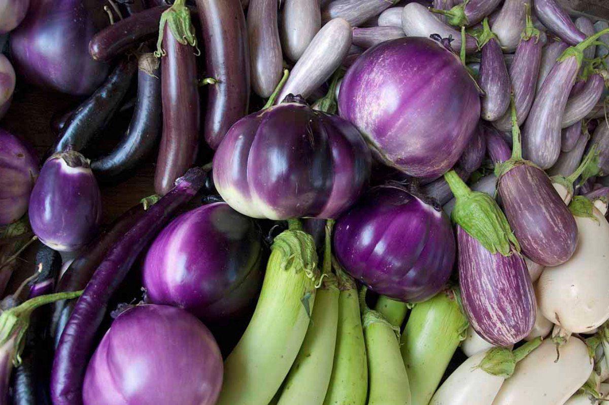 Growing Eggplant Indoors