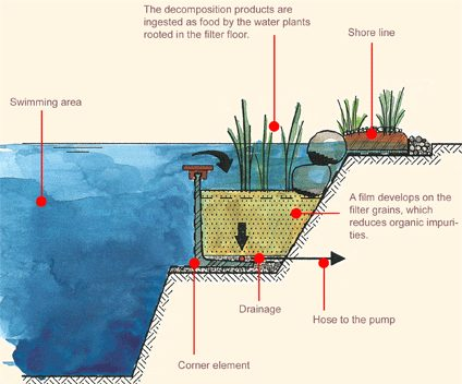 How Natural Swimming Pools Clean Water