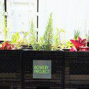 Milk Crate Urban Farming: Toronto Bowery Project