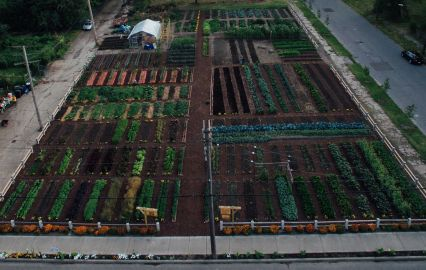 MUFI Crops at Detroit Urban Agrihood
