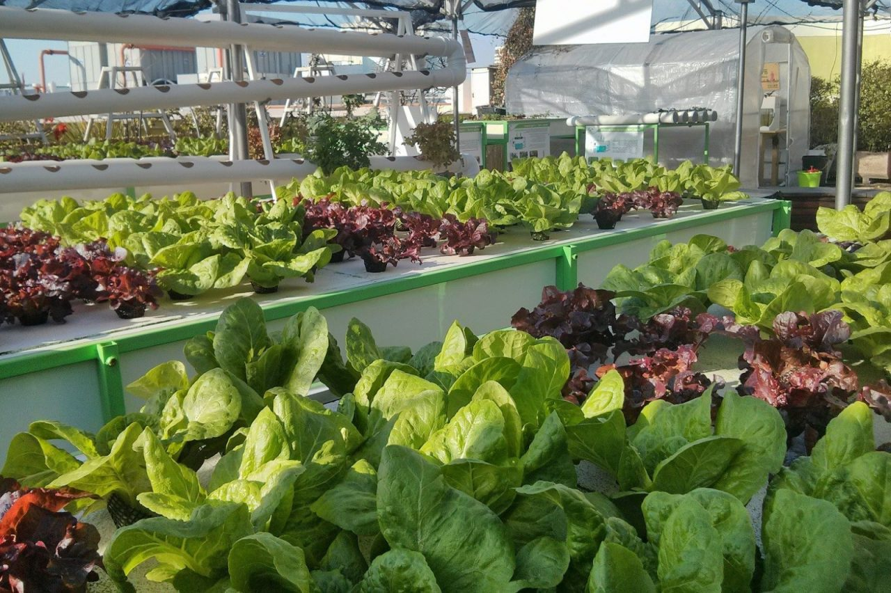 Rooftop Hydroponic Farming: Green In The City, Tel Aviv