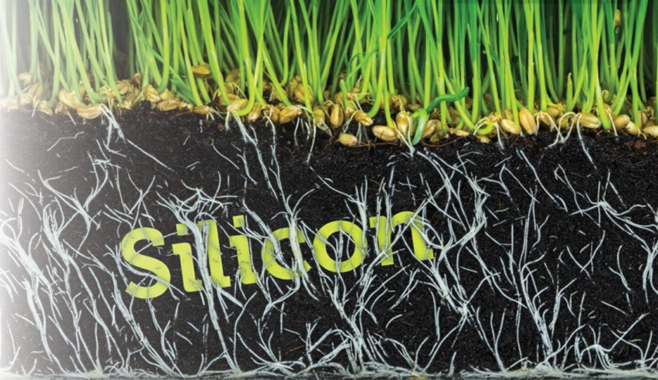 What is Silicon? An Important Gardener's Tool
