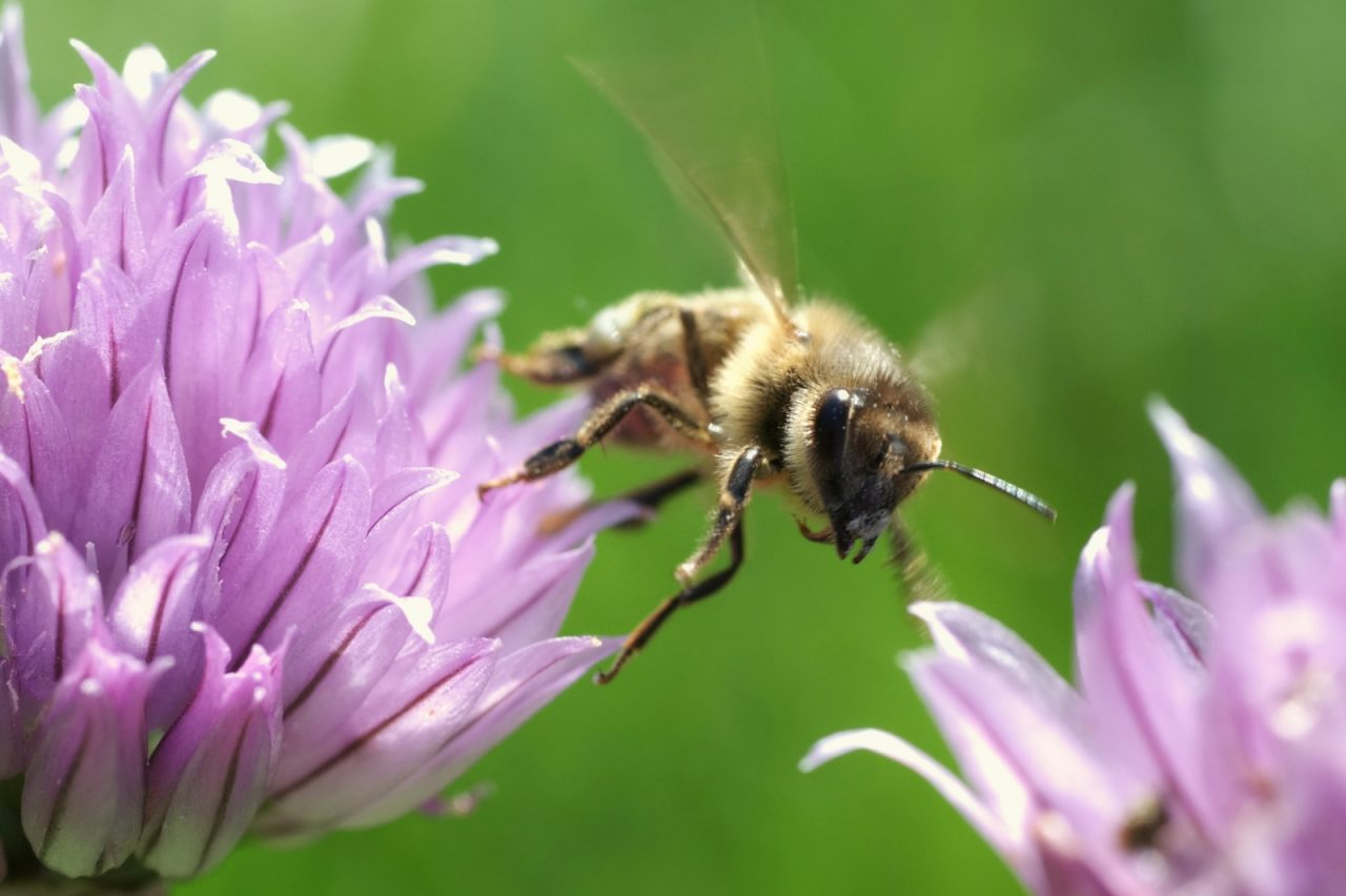Surfactant Confirmed Honey Bee Killer