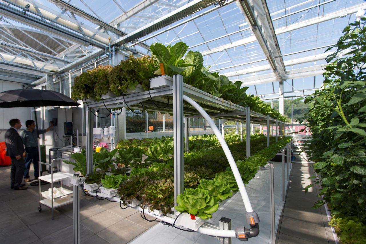 Aquaponics: Europe's Largest Urban Farm