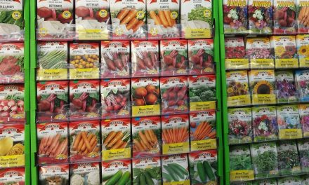 Plant Patents, Food Sovereignty & Seed Diversity